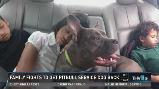 Family fights to get pitbull service dog back