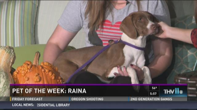 Watch Interview: Raina looking for forever home